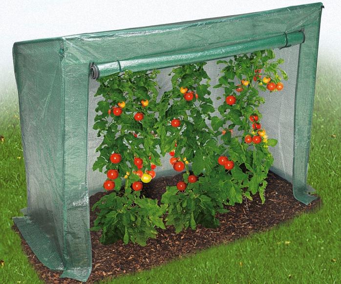 Парник для помидор фото