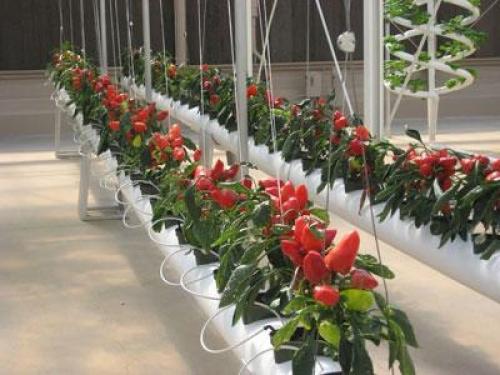 обладателей выращивание цветов круглый год в открытом грунте для любого