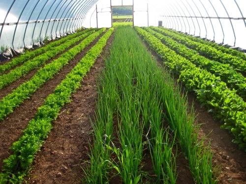 Прибыльный бизнес: выращивание зелени на продажу 27