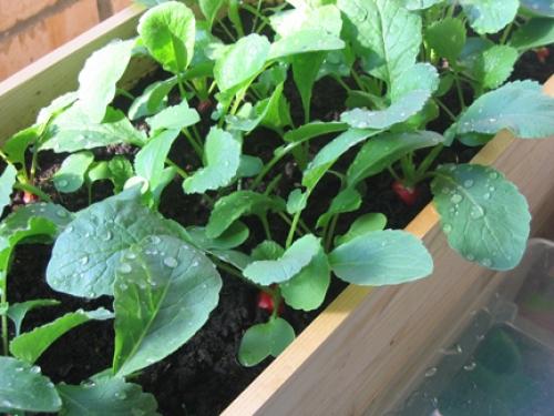 Выращивание зелени в теплице как бизнес / зелень в парнике к.